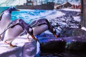 coolio penguins