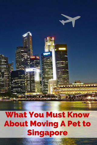 What you must know about moving your pet to Singapore