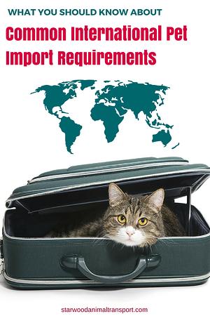 international pet import requirements  http://starwoodanimaltransport.hs-sites.com/blog/international-pet-import-requirements/  @starwoodpetmove