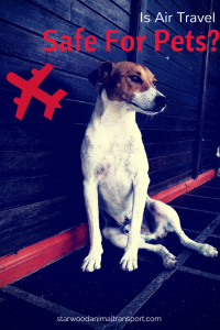 Is air travel safe for pets  http://starwoodanimaltransport.hs-sites.com/blog/is-air-travel-safe-for-pets/ @starwoodpetmove