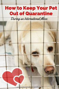 can I keep my pet out of quarantine during an international move  http://starwoodanimaltransport.hs-sites.com/blog/how-can-i-keep-my-pet-out-of-quarantine-during-an-international-move/ @starwoodpetmove
