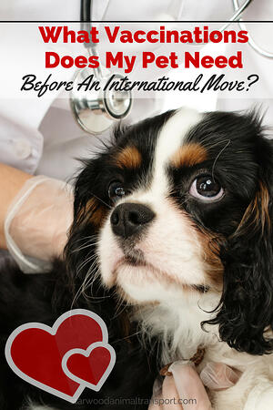 What vaccinations does my pet need before an international move? http://starwoodanimaltransport.hs-sites.com/blog/vaccinations-my-pet-needs-before-an-international-move/ @starwoodpetmove