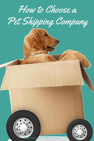 choose a pet shipping company