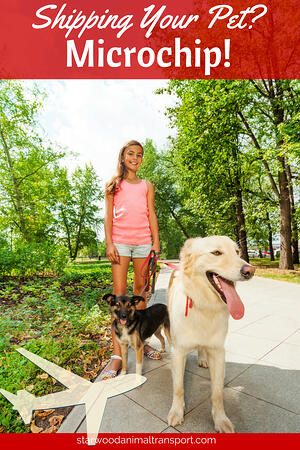 Why microchips are important when shipping your pet  www.starwoodanimaltransport.com/why-microchips-are-important-when-shipping-your-pet  @starwoodpetmove