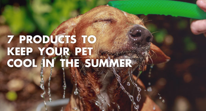wet dog staying cool in the summer with a garden hose