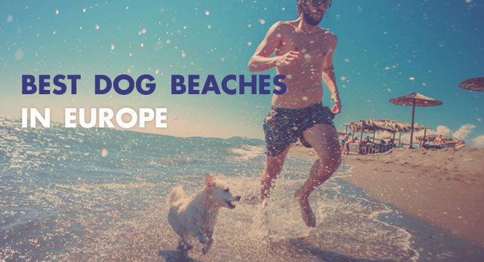 Here Are The Best Dog Beaches In Europe.