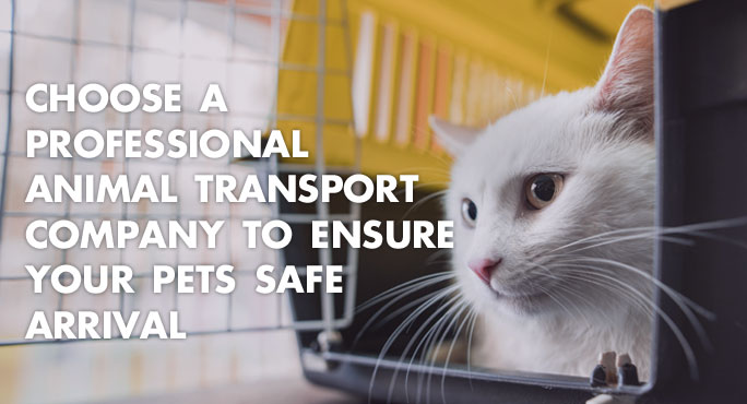 Choose a Professional Animal Transport Company to Ensure Your Pets Safe Arrival htt