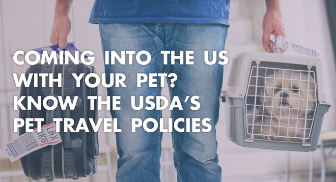 Pet owner coming into the US airport with pet and knowing USDA pet travel policies