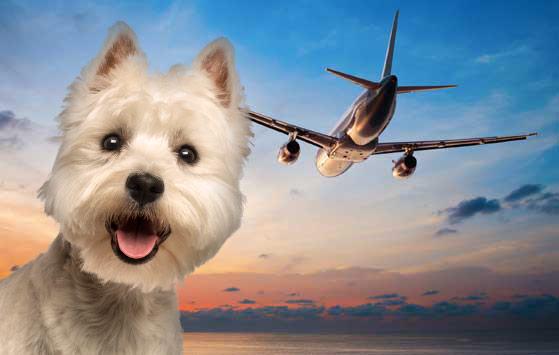 Pet Transport