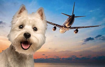 dog-and-plane-flying-with-pets