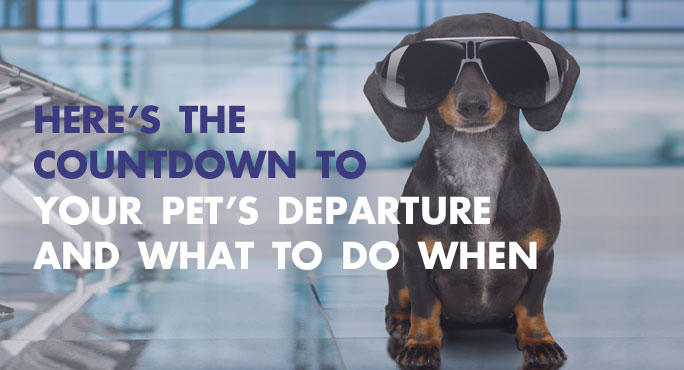 Here's the Countdown to Your Pet's Departure and What to Do When http://www.starwoodanimaltransport.com/blog/what-to-do-before-pet-departure @starwoodpetmove