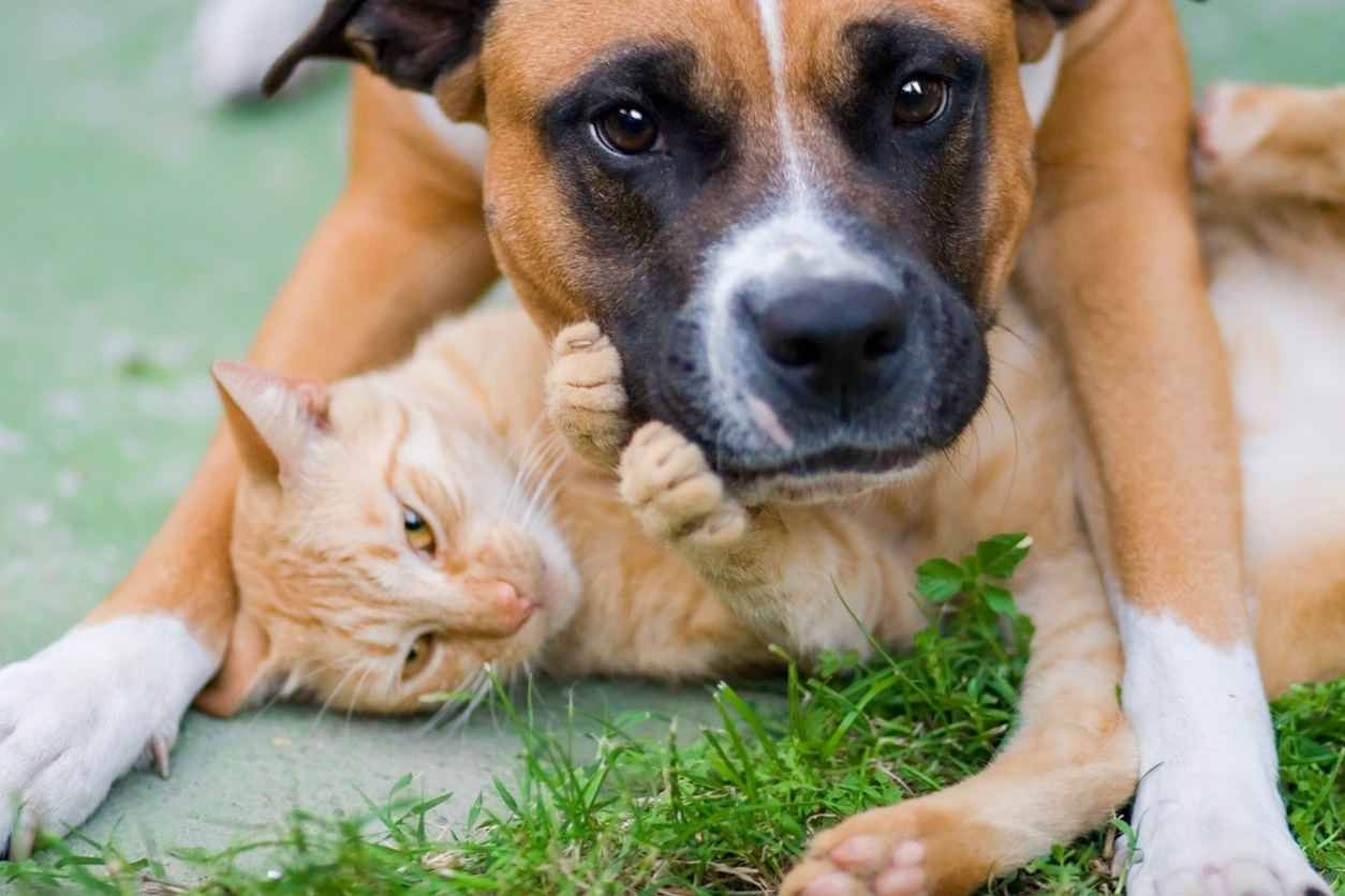 Cute dog and Cat -jp.jpg