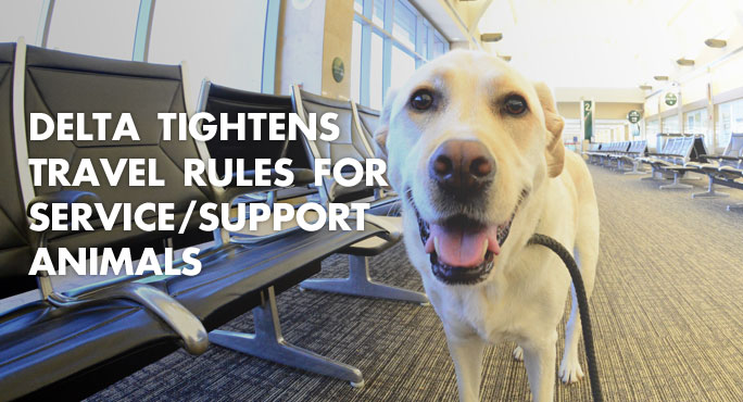 a dog at the airport and delta airlines new rules for service and support animals