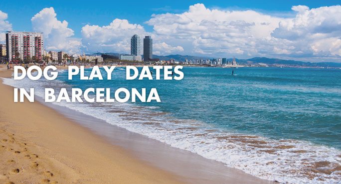 Beach in barcelona where you can have dog play dates