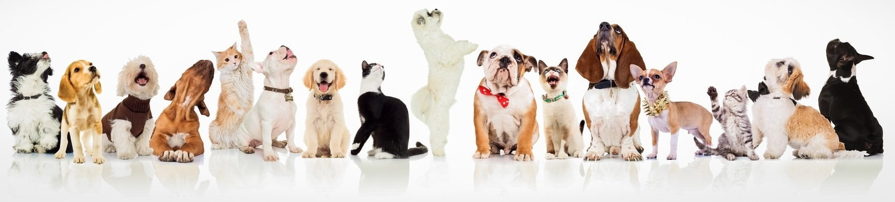 Dogs looking a pet protection plan - jp-1.jpg