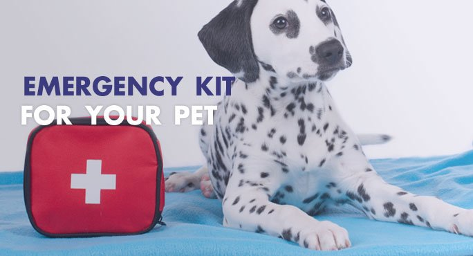 What should be in your pet's emergency kit.