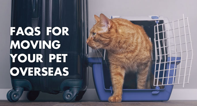 cat walking our of crate next to a suitcase