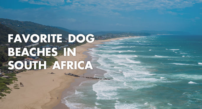 Favorite-Dog-Beaches-In-South-Africa-Blog