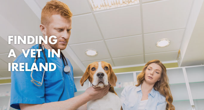Vet in Ireland with dog and owner