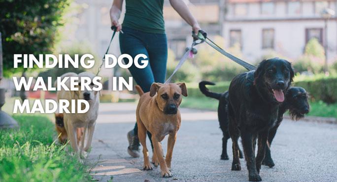 dog walker walking dogs on the street