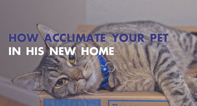 How to Acclimate Your Pet in His New Home.