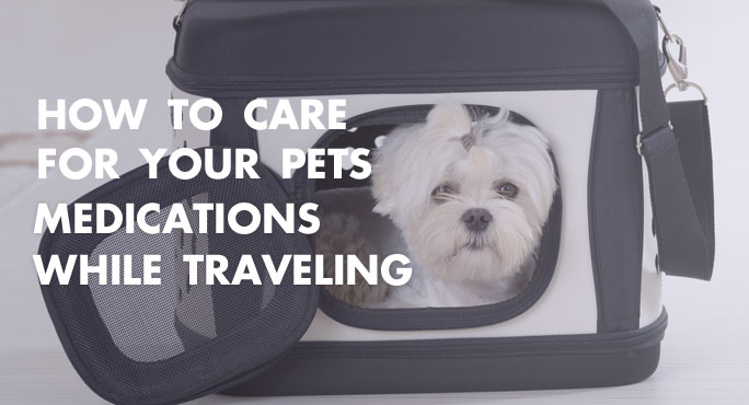 How to care for your pet's medications while traveling.