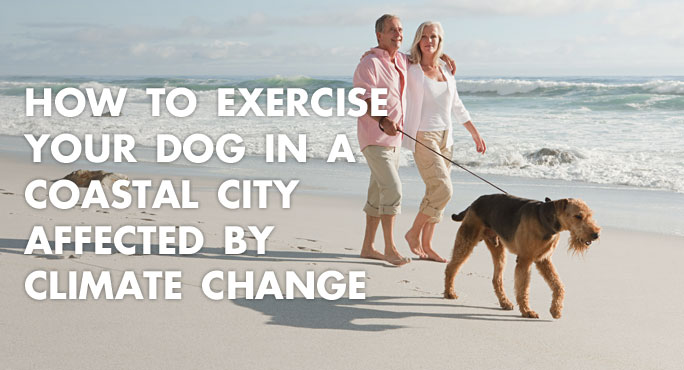 a couple walking their dog in a coastal city affected by climate change