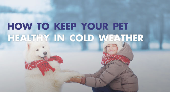 How to Keep Your Pet Healthy in Cold Weather