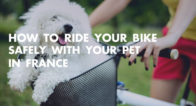 How-To-Ride-Bike-Safely-with-Pet-In-France-Blog (1).jpg
