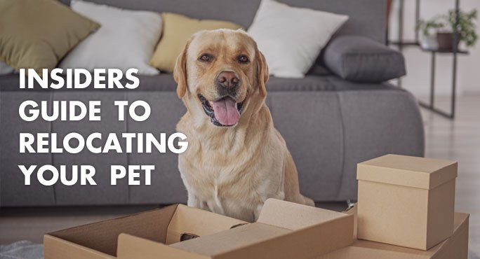 Dog with boxes for packing read the Insiders Guide To Relocating Your Pet