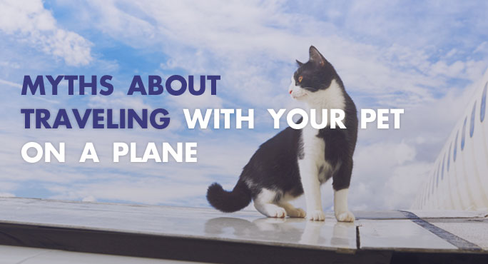 How myths about traveling on a plane with pets are untrue