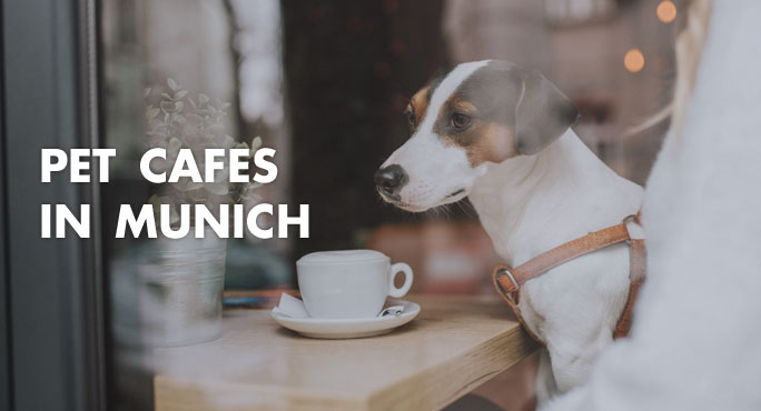 Dog sitting in a pet cafe in munich