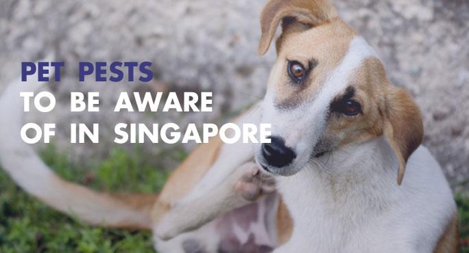 Pet-Pests-Singapore.jpg
