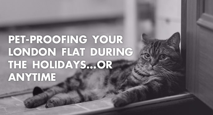 Beautiful cat lying on the floor of a pet-proofed apartment in London