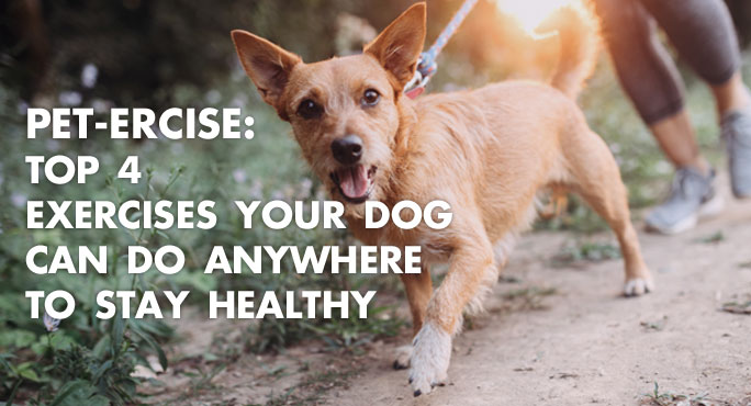 Pet-ercise: Top 4 Exercises Your Dog Can Do Anywhere to Stay Healthy https://www.starwoodanimaltransport.com/exercises-dog-can-do-anywhere