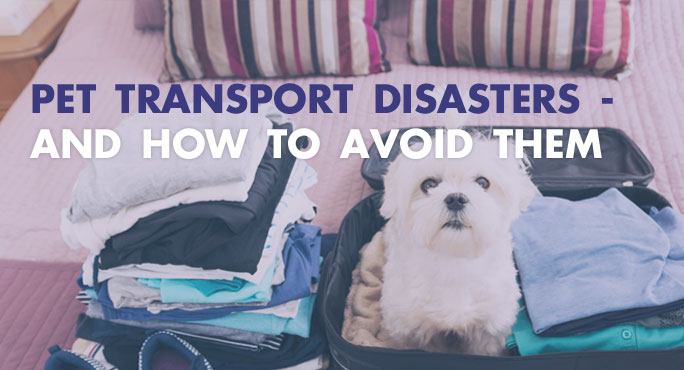 Pet Transport Disasters - And How to Avoid Them http://www.starwoodanimaltransport.com/blog/pet-transport-disasters-and-how-to-avoid-them