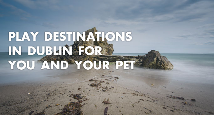 Killiney Hill in Dublin, a great play destinations for you and your pet