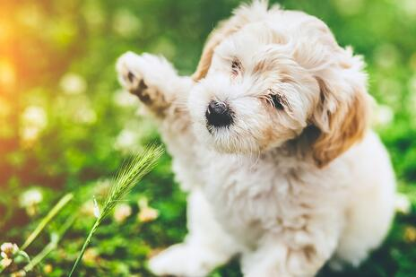 Raise Your Hand For Dog Protection -jp.jpg