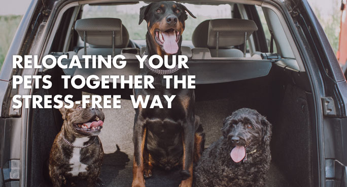 Relocating Your Pets Together The Stress-free Way https://www.starwoodanimaltransport.com/blog/relocating-your-pets-together-the-stress-free-way