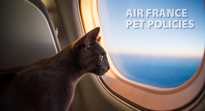 cat looking out the window of a plane