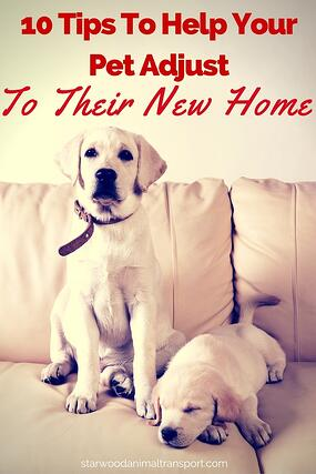 10 Tips To Help Your Pet Adjust To Their New Home http://www.starwoodanimaltransport.com/blog/10-tips-to-help-your-pet-adjust-to-their-new-home @starwoodpetmove