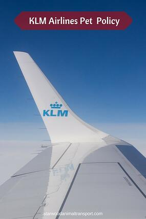 KLM logo on its aircraft wing and information on KLM airlines pet policy