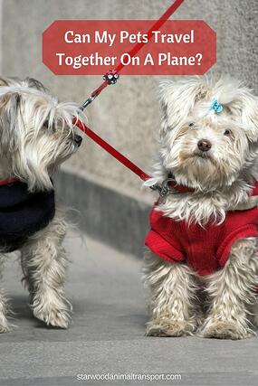 Can My Pets Travel Together On A Plane? http://www.starwoodanimaltransport.com/blog/can-my-pets-travel-together-on-a-plane @starwoodpetmove