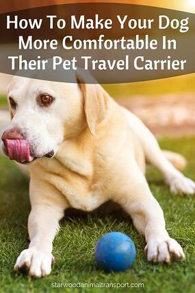 How To Make Your Dog More Comfortable In Their Pet Travel Carrier http://www.starwoodanimaltransport.com/blog/how-to-make-your-dog-more-comfortable-in-their-pet-travel-carrier @starwoodpetmove