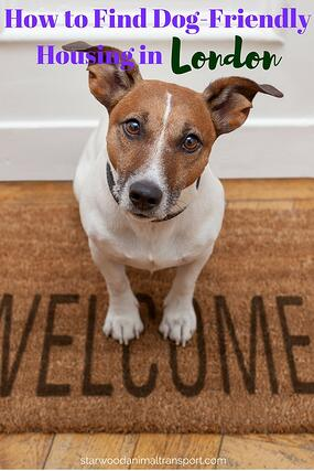 How to Find Dog-Friendly Housing in London http://www.starwoodanimaltransport.com/blog/how-to-find-dog-friendly-housing-in-london @starwoodpetmove