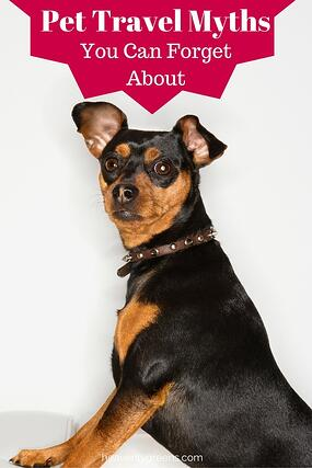 Pet Travel Myths You Can Forget About http://www.starwoodanimaltransport.com/blog/pet-travel-myths-you-can-forget-about @starwoodpetmove