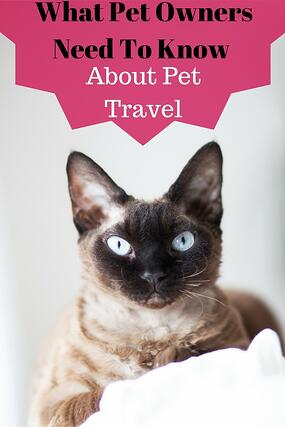 What Pet Owners Need To Know About Pet Travel http://www.starwoodanimaltransport.com/blog/what-pet-owners-need-to-know-about-pet-travel @starwoodpetmove
