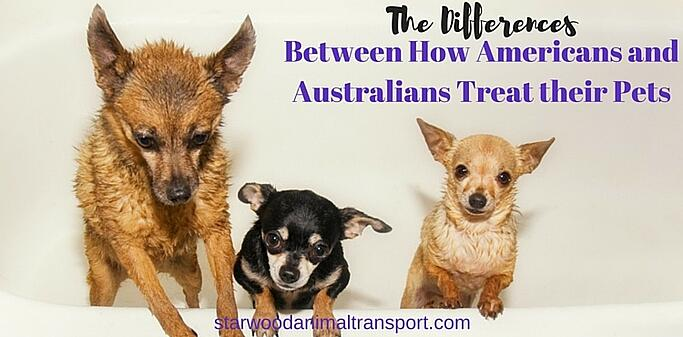 The Differences Between How Americans and Australians Treat their Pets http://www.starwoodanimaltransport.com/blog/the-differences-between-how-americans-and-australians-treat-their-pets @starwoodpetmove
