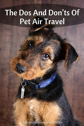 The Dos And Don'ts Of Pet Air Travel http://www.starwoodanimaltransport.com/blog/the-dos-and-donts-of-pet-air-travel @starwoodpetmove