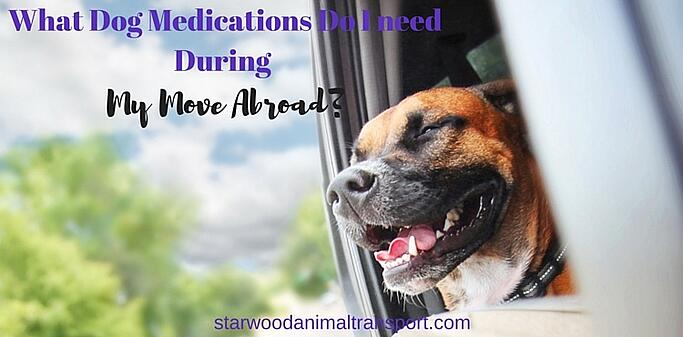 What Dog Medications Do I Need To Bring During My Move Abroad? http://www.starwoodanimaltransport.com/blog/what-dog-medications-do-i-need-to-bring-during-my-move-abroad @starwoodpetmove